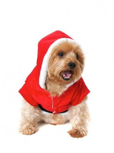 santa-paws-dog-christmas-outfit-urbanpup