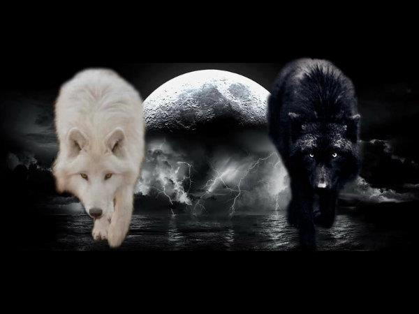 Black wolf white wolf full moon