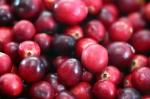Cranberries20101210