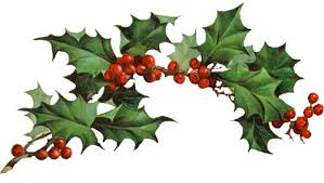 two holly berry branches