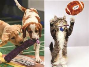 Puppy Kitten Bowl