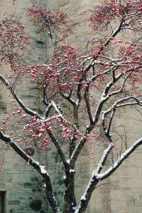 Winter-Tree-34870004