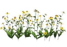 flowers June