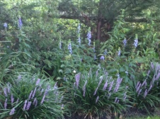 Garden Sept 1