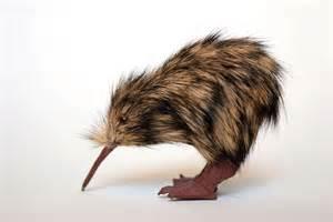 kiwi bird