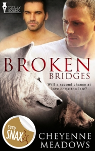 Broken Bridges cover